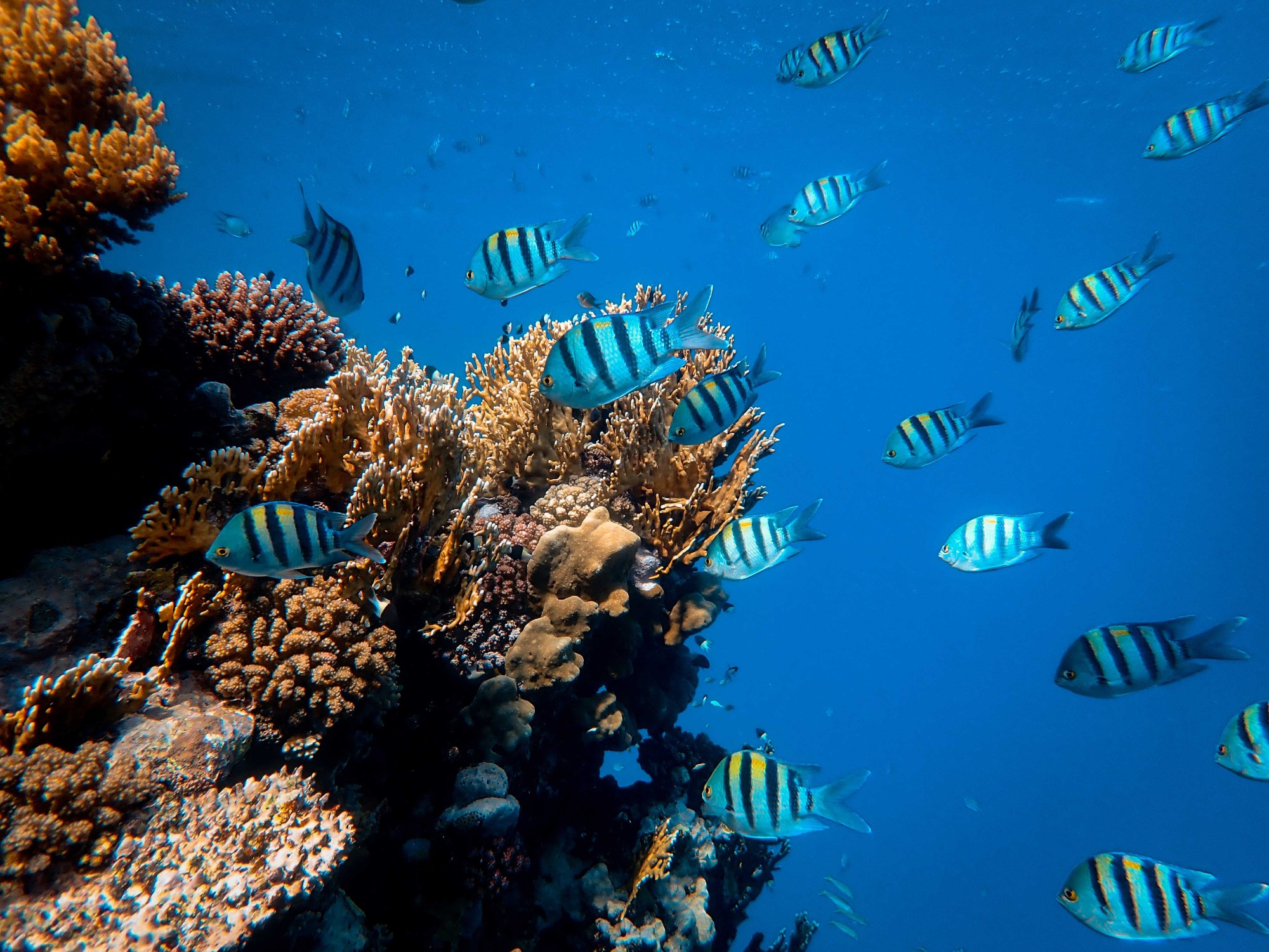 Researchers design bionic 3D printed corals that could help energy production and coral reefs (ForgePress)
