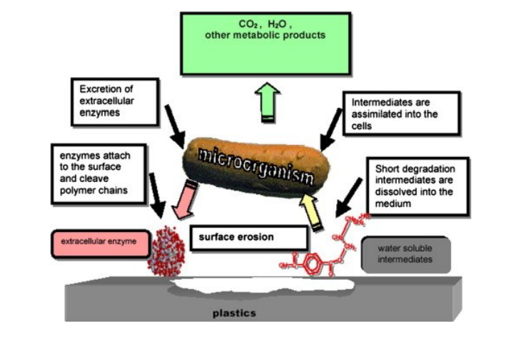 3D Printing with Bioplastics: Engineering Biodegradable PHA Blends (3dPrint.com)